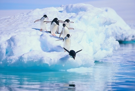 Pandas, Penguins, Hummingbirds, Oh My! How to Keep Up With the Latest SEO Trends