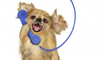 puppy-voicemail-phone-small