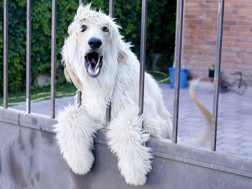 shocked-doggy