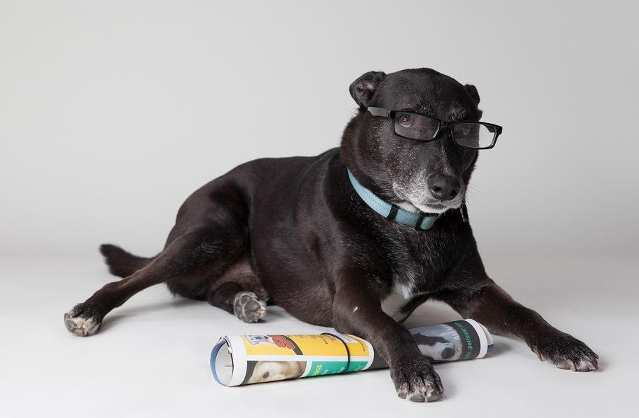 dog_newspaper