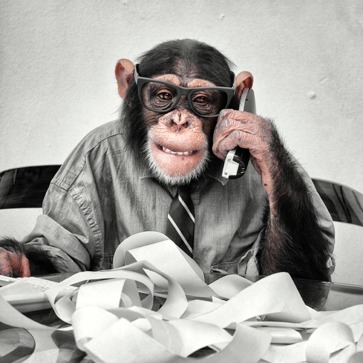 chaos_chimp