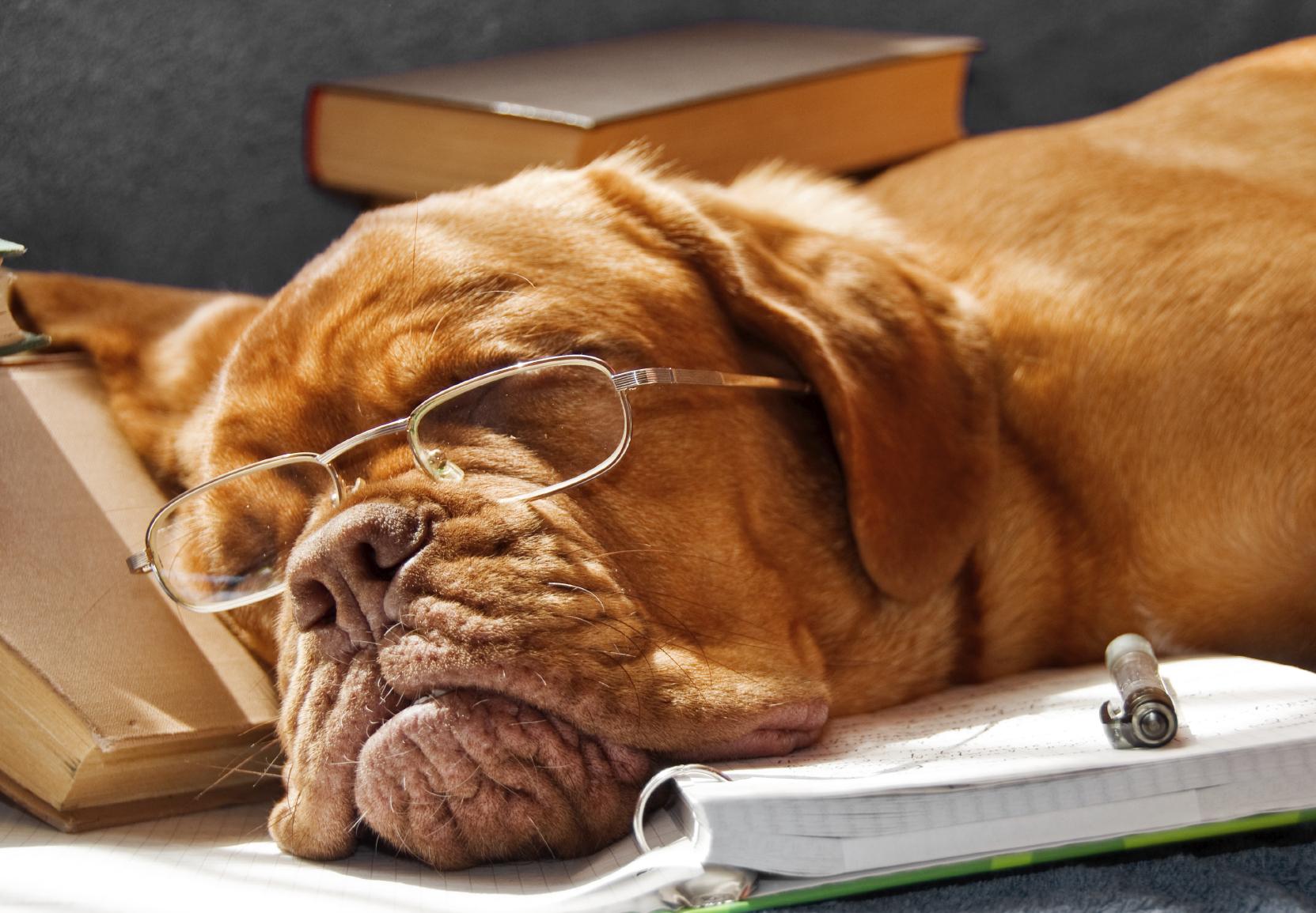 sleeping_dog