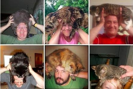 cat-fro