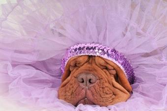glamourous-dog