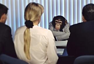 bdr-promoted-monkey-wrangler-569895-edited