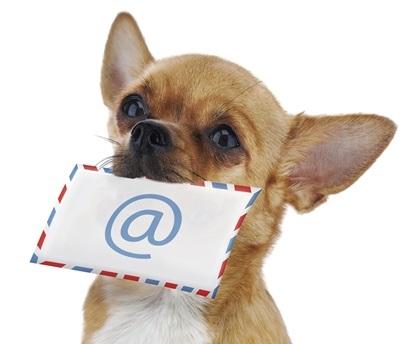 dog-envelope-email