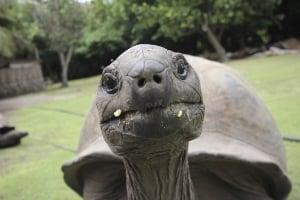 Tortoise-241681-edited