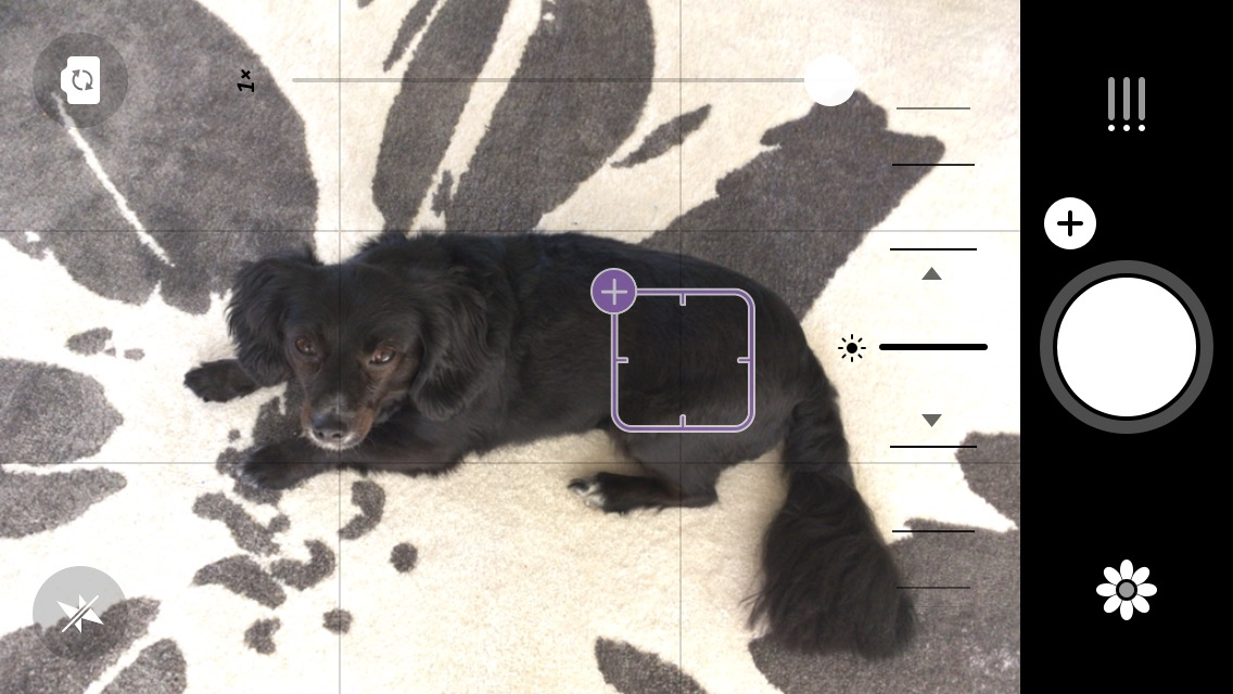 Before picture of black dog on Camera+1 photo editing app