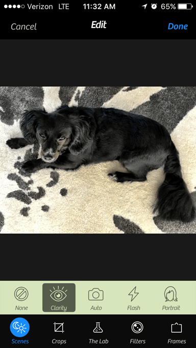 Sharpened picture of black dog using Camera+ photo editing app