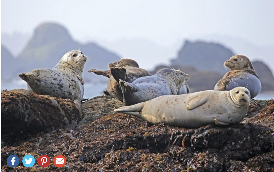 Four social buttons displayed in the bottom left corner of a photo of seals using the Envira Gallery plugin