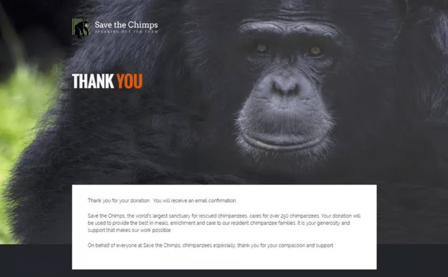 save the chimp's thank you page