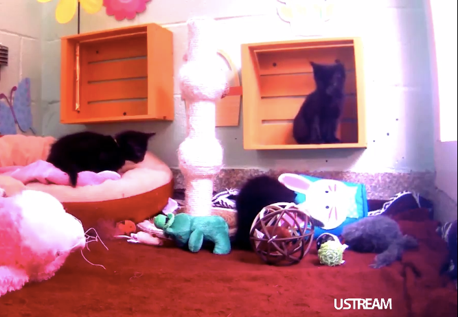 USTREAM of cats from Animal Planet's kitten and puppy cam