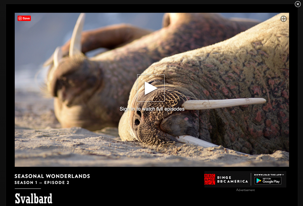 bbc video of seasonal wonderlands with walrus