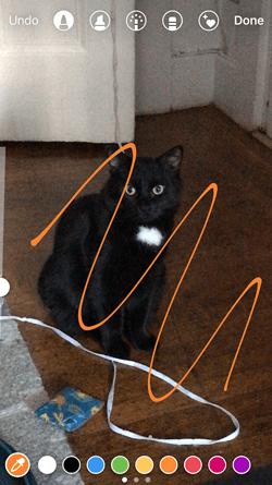 Orange pen added to Instagram Story of a black cat