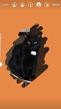 Orange background added to Instagram Story of a black cat