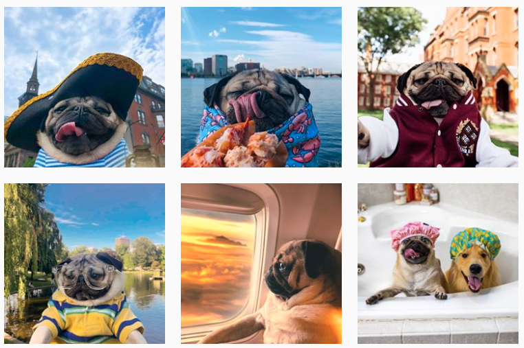 dougthepug-instagram-aesthetic example