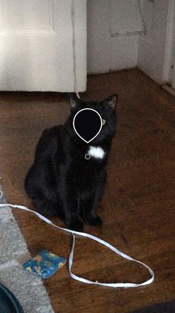 Dropper icon set to black in Instagram