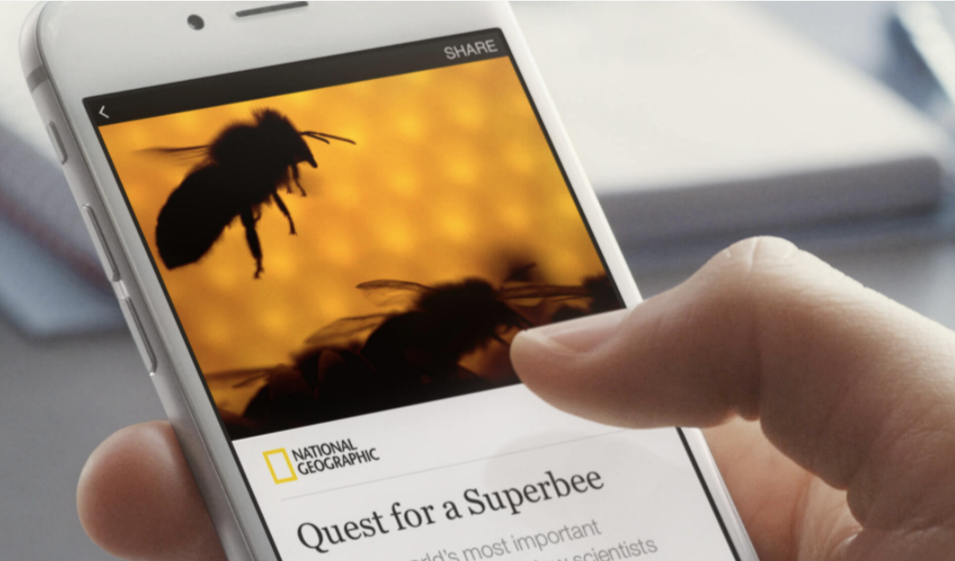 facebook instant articles bee-1.png