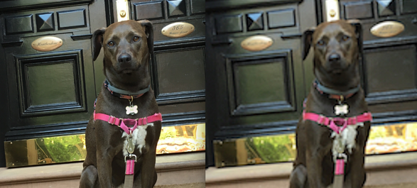 high vs low resolution image of a dog