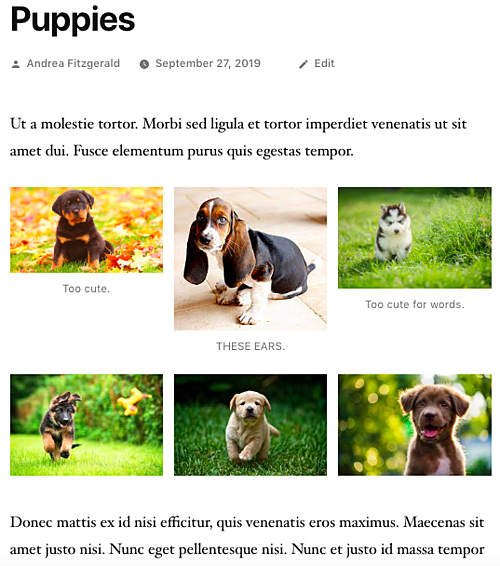 Example of published photo gallery in WordPress