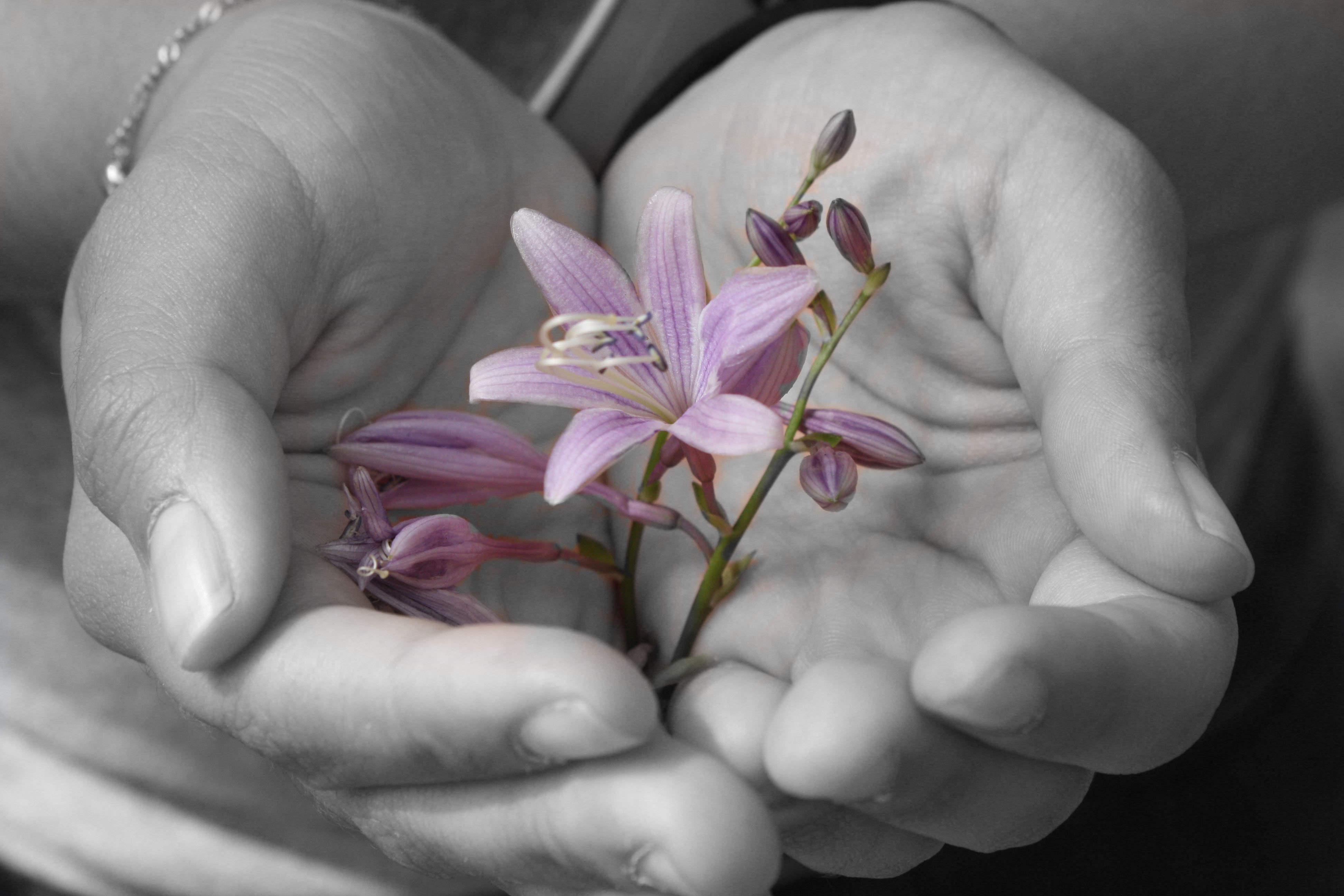 Grayscaled photo taken on mobile camera with color blocking to reveal purple flower in woman's hand