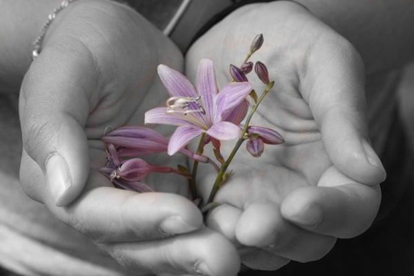 Foto de Grayscaled tomada en una cámara móvil con bloqueo de color para revelar una flor morada en la mano de la mujer
