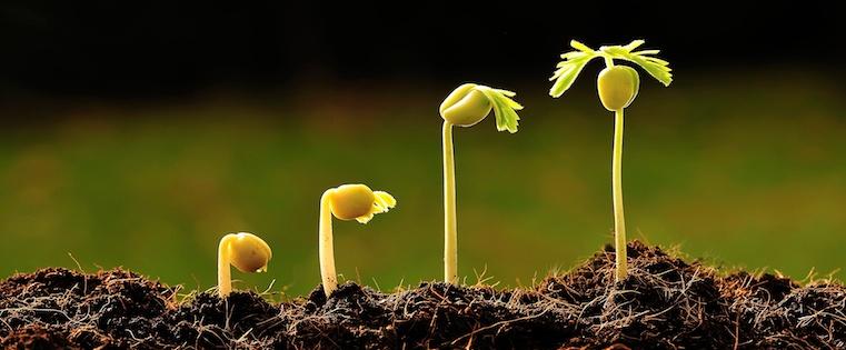 increase_plant.jpg