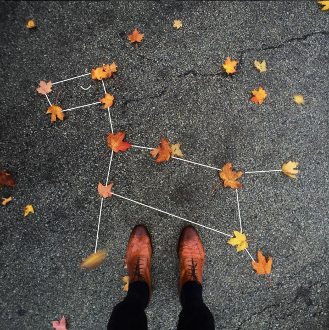 leaf-dog-constellation.png