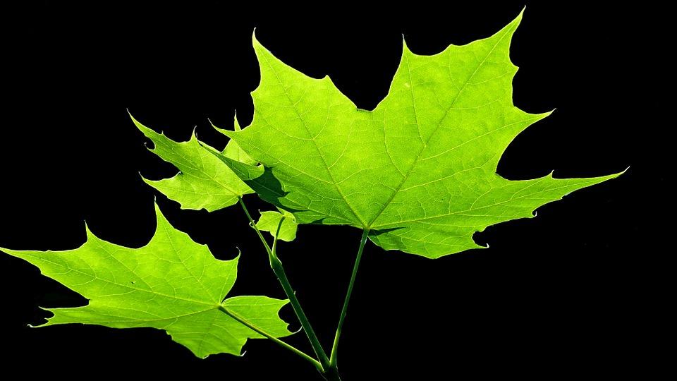 leaves-835488_960_720.jpg