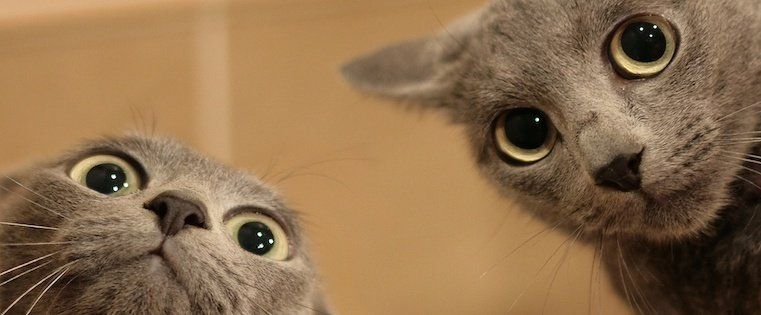 scared_cats.jpg