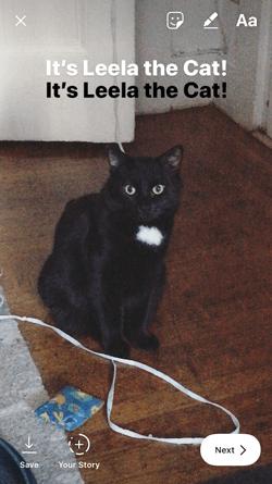Instagram Story of Leela the cat