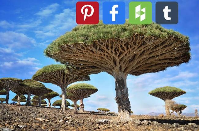 WordPress image sharing plugin: AddToAny Share Buttons