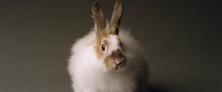 Snow Day Games & Rabbit Casting Calls: 5 of the Best Ads of the Week