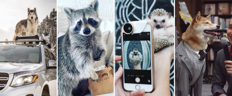Animal Influencers: The Stories Behind 11 Famous Pets on Instagram