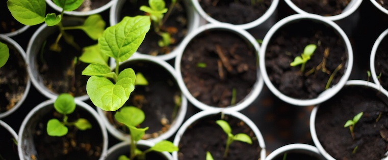 7 Tried-and-True Strategies SaaS Businesses Are Using to Grow