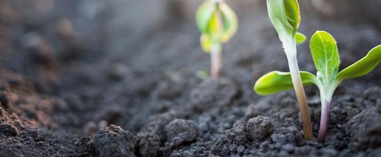 4 Steps to Hire a World-Class Sales Development Team