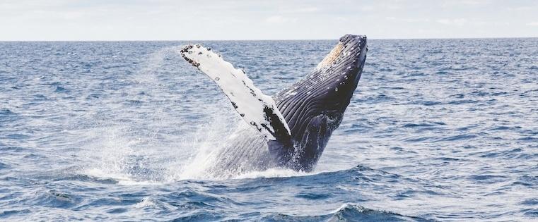 4 Techniques for Landing Your Sales Whale