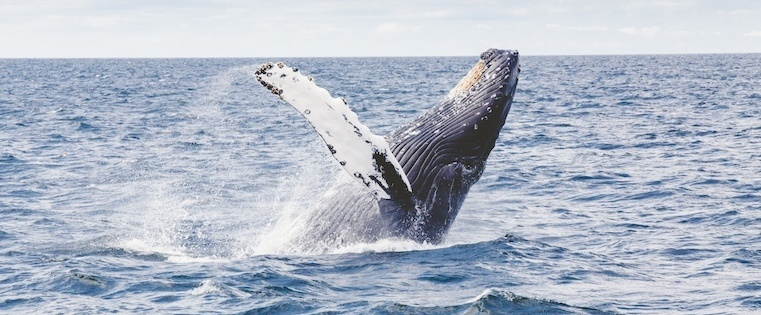 4 Techniques for Landing Your Sales Whale
