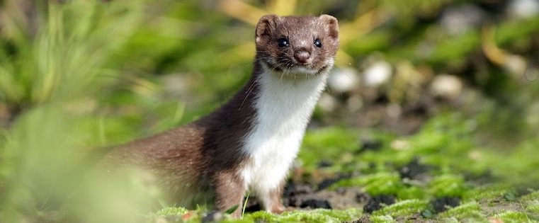 11 Weasel Words to Avoid in Conversation at All Costs