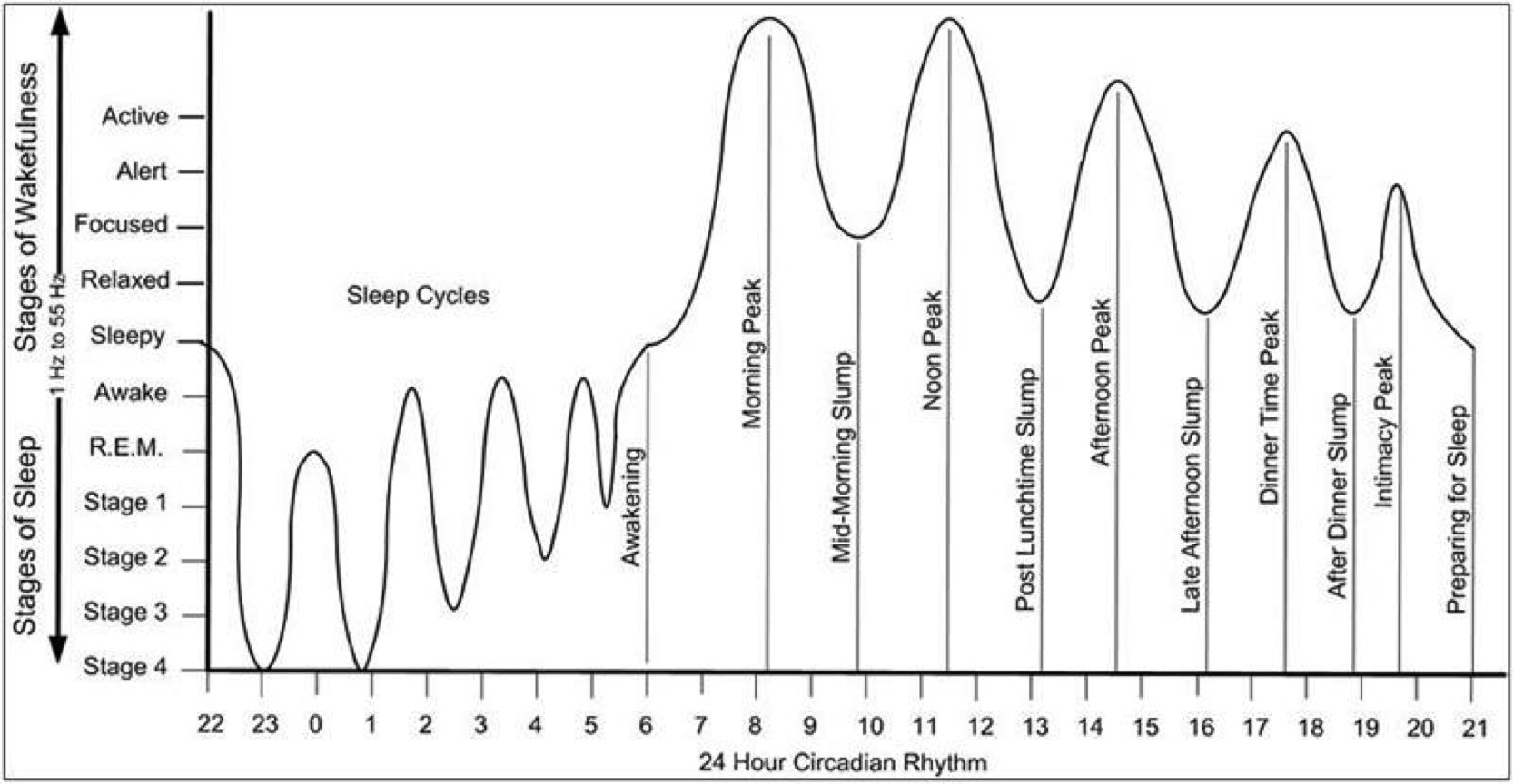 Sleep_Cycles_Chart.png