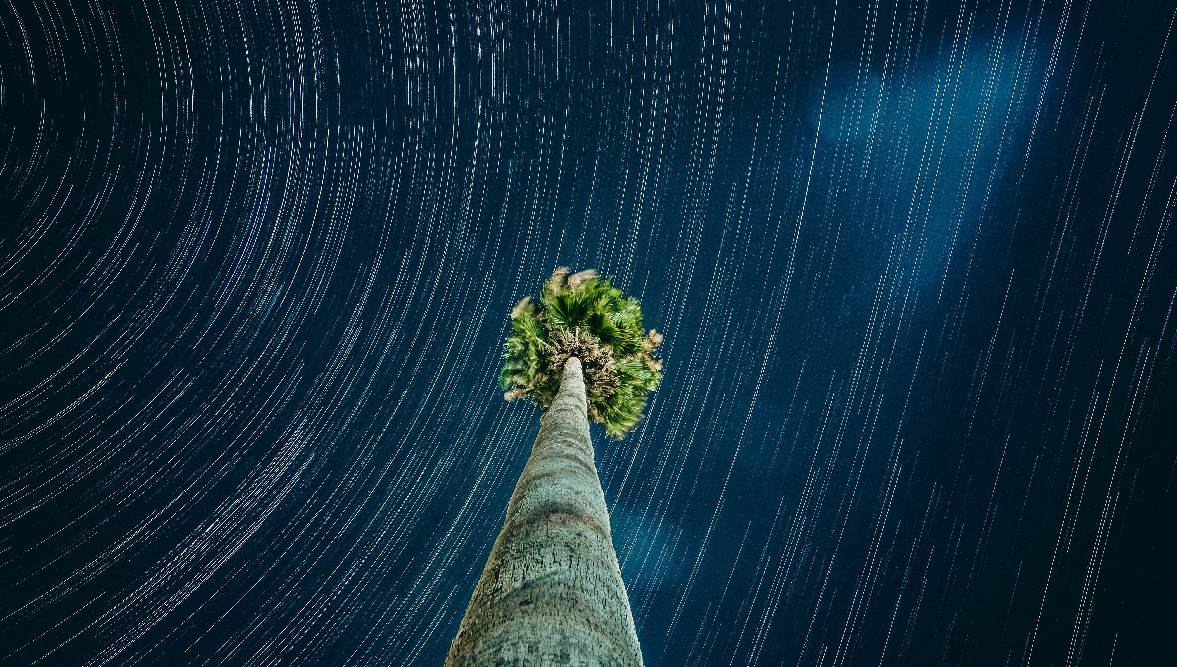 Stars streaking above a stationary palm tree
