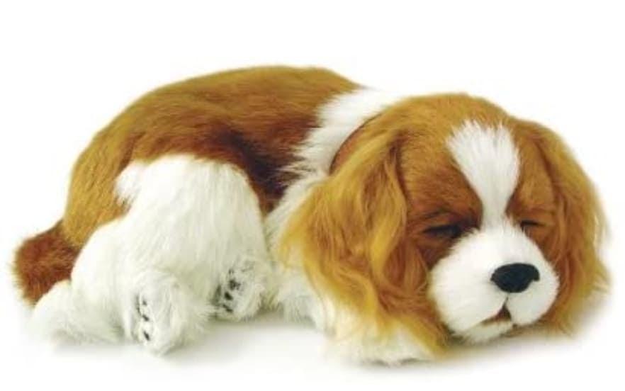Customer service qualities puppy doll