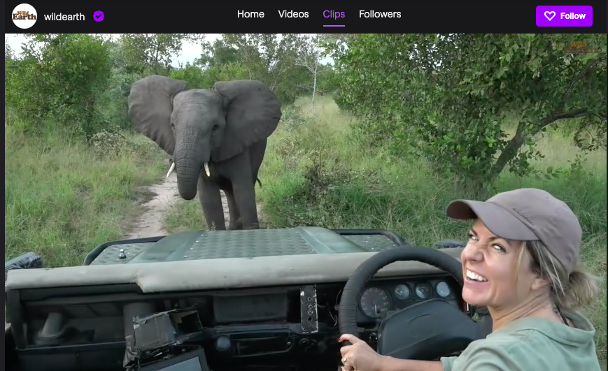 Wild Earth's Lauren streaming a safari ride on Twitch.