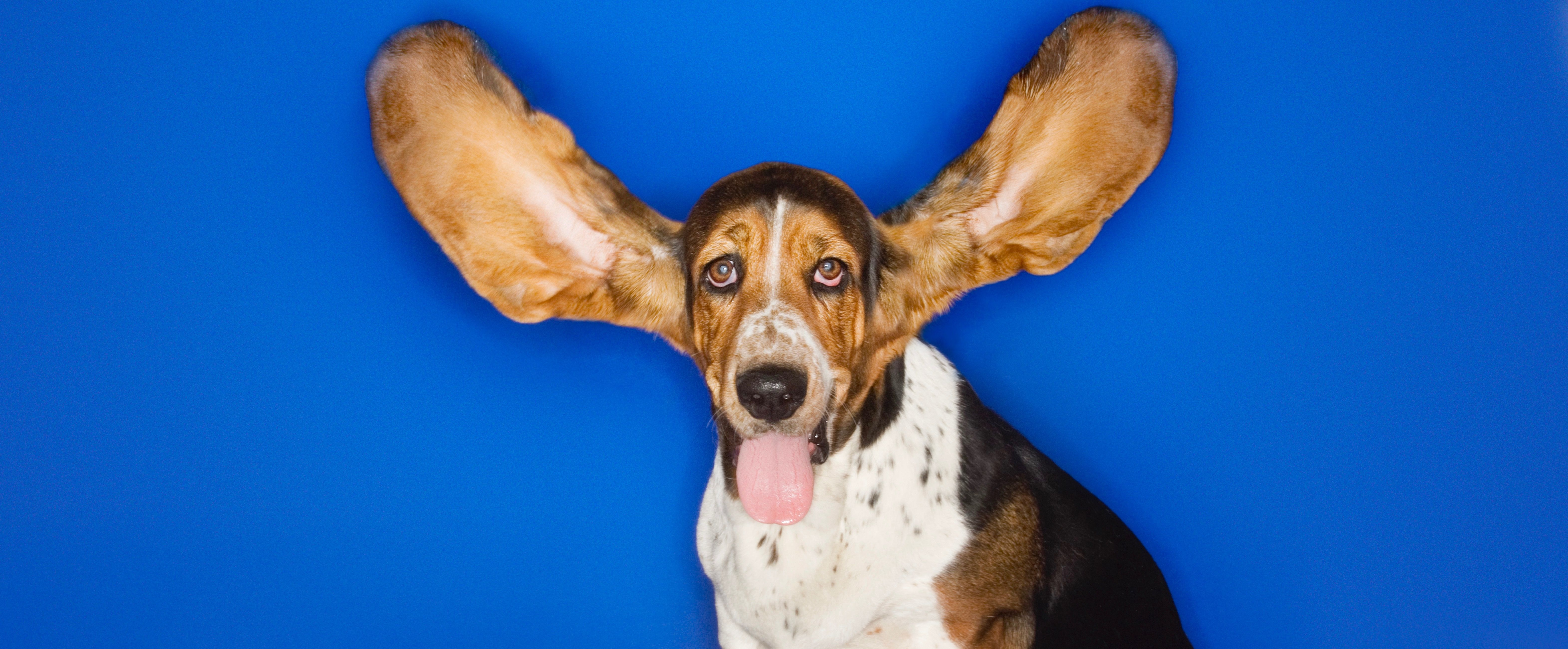6 Phrases That Demonstrate Active Listening