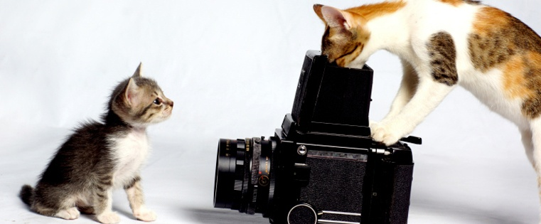 What Hollywood and Cats Can Teach You About Creating Marketing Personas