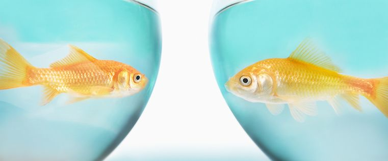 The Goldfish Conundrum: How to Create Content for Short Attention Spans