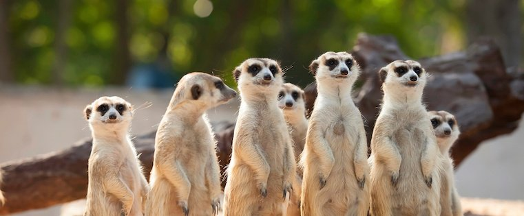 5 Creative Ways to Use Meerkat or Periscope In Your Marketing [SlideShare]