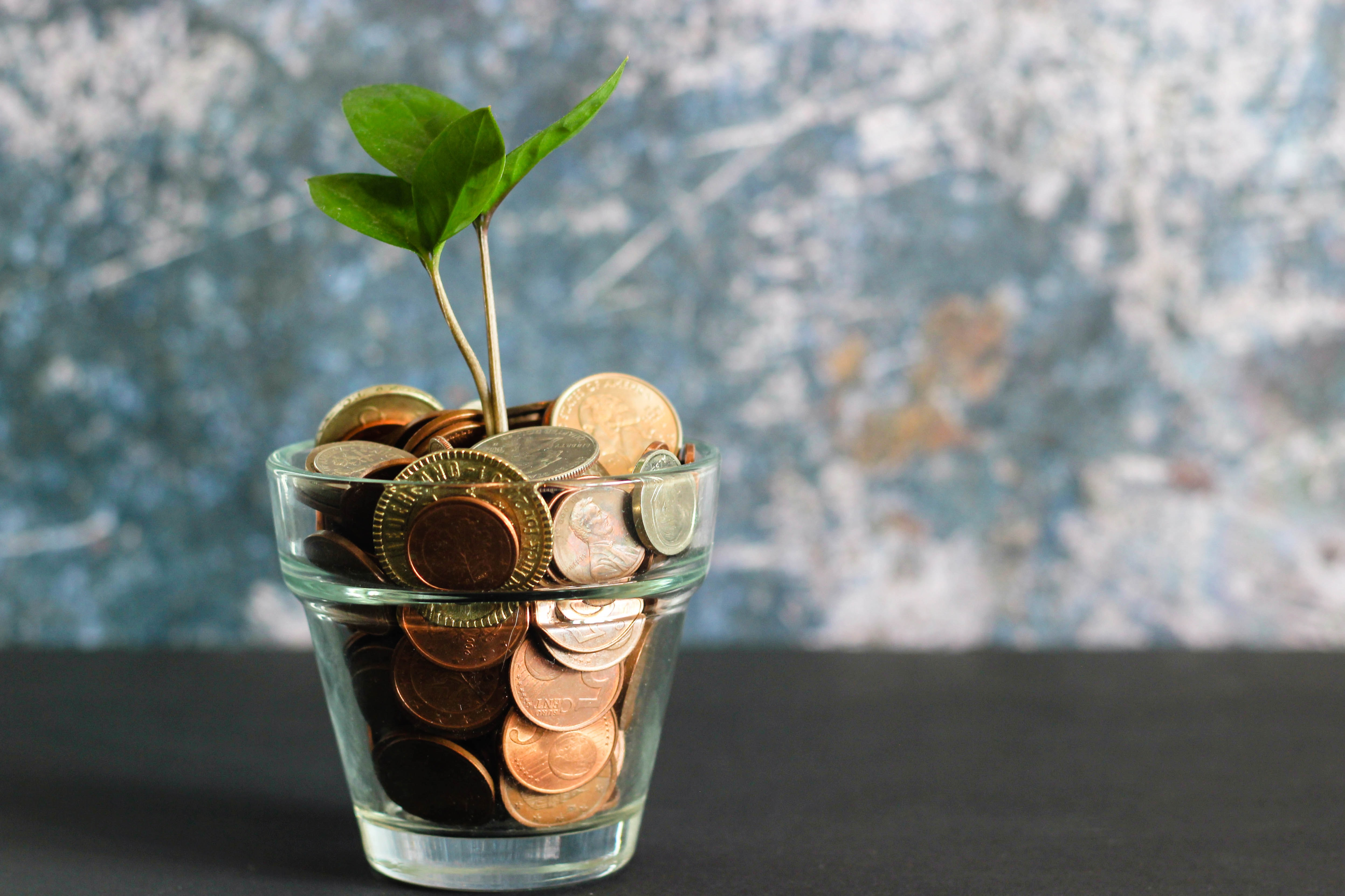 Small green plant growing out of a glass full of bronze and copper coins