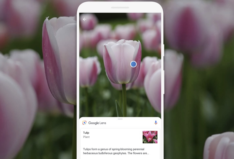 Here's What Happened When We Put Google Lens to the Test