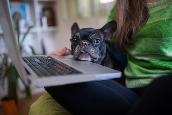 How to Work From Home: 20 Tips From People Who Do It